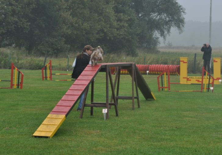 Dog Obedience And Agility Training