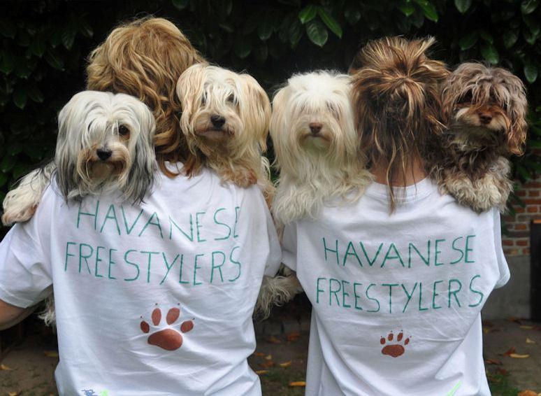 Dog Dance - Canine Freestyle - Heelwork To Music