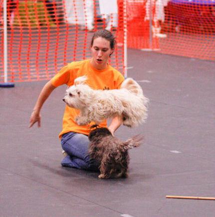 hondenschool balans geffen