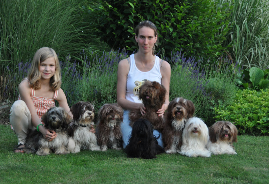 Havanese Party (3) - click to see pictures