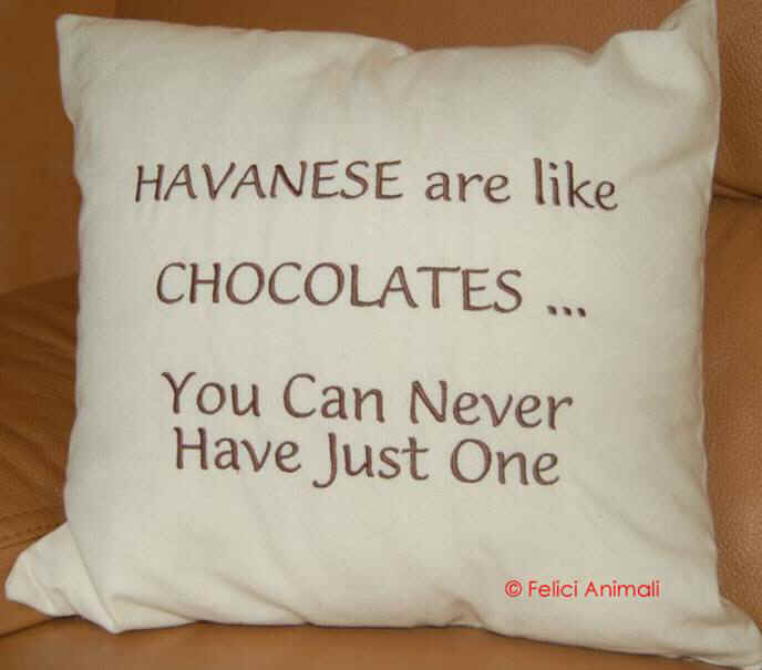 Havanese are like chocolates You can never have just one