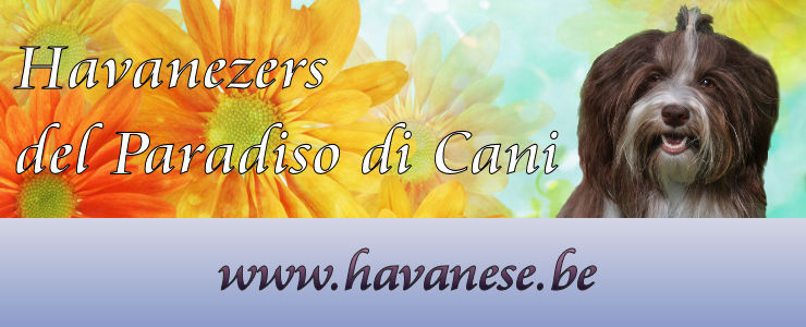 Home Felici Animali Del Paradiso Di Cani Havanezer